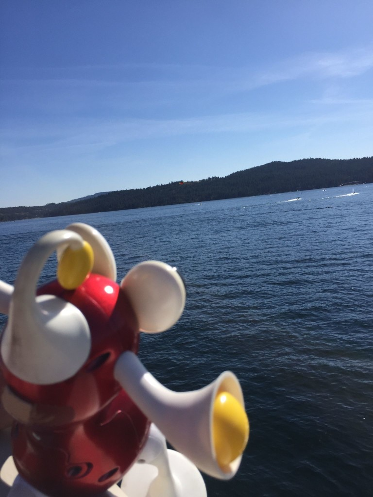 Flip gazes out over Lake Coeur d'Alene. Water, good.
